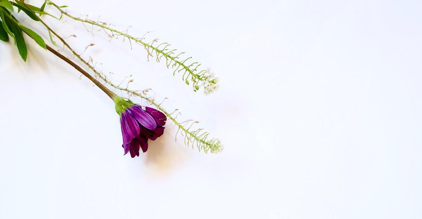 flor blossom terapias